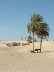 Photographie personnelle, prise par Douz (Tunisie), Auteur: Asram